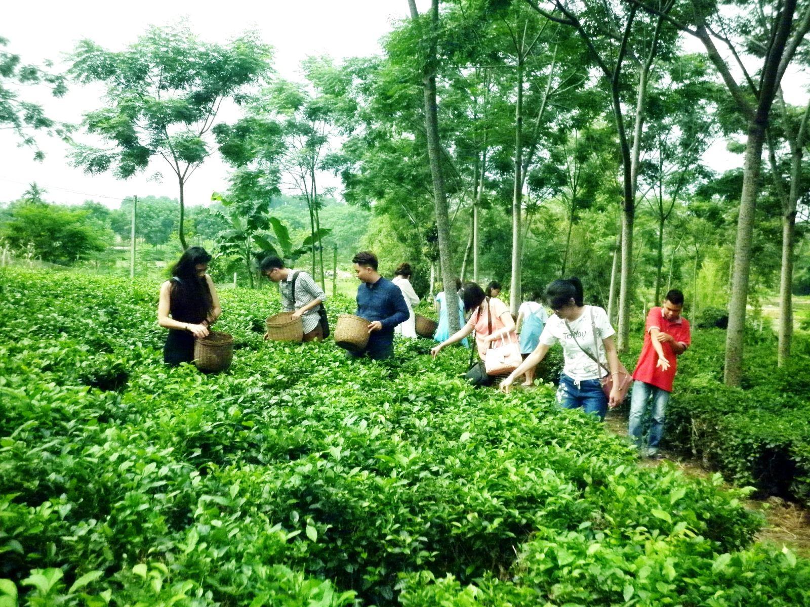 """Tổ chức Hội thảo """"Phát triển du lịch cộng đồng, du lịch nông nghiệp gắn với Chương trình xây dựng nông thôn mới"""""""