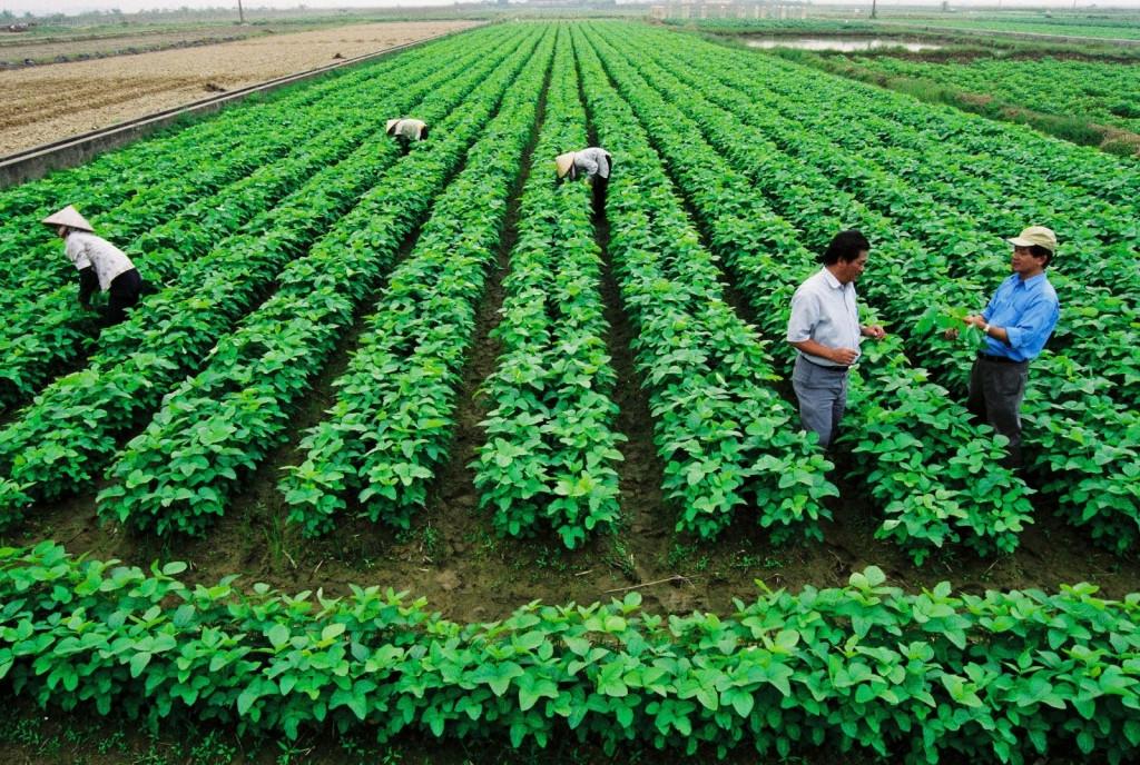 Đánh giá chính sách miễn, giảm thuế sử dụng đất nông nghiệp.