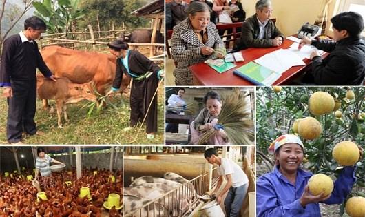 Ban hành Kế hoạch thực hiện Dự án hỗ trợ phát triển sản xuất, đa dạng hóa sinh kế và nhân rộng mô hình giảm nghèo