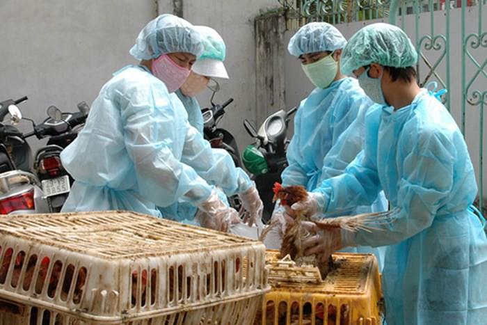 Triển khai Kế hoạch quốc gia phòng, chống bệnh Cúm gia cầm giai đoạn 2019 – 2025