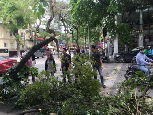 Tăng cường kiểm soát và quản lý cây xanh đô thị nhằm đảm bảo an toàn, phòng chống thiên tai trong mùa mưa bão.