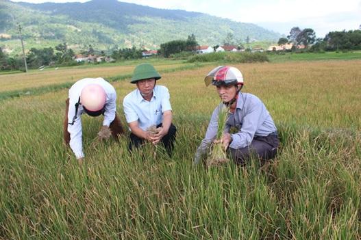 Huyện M'Đrắk gần 1.000 ha cây trồng vụ Hè Thu bị hạn