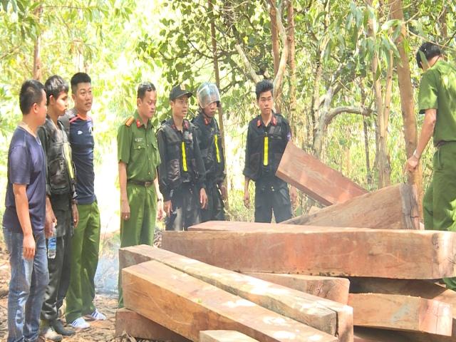 Tạm giữ hình sự các đối tượng trong vụ phá rừng khai thác gỗ lậu cực khủng ở Đắk Lắk