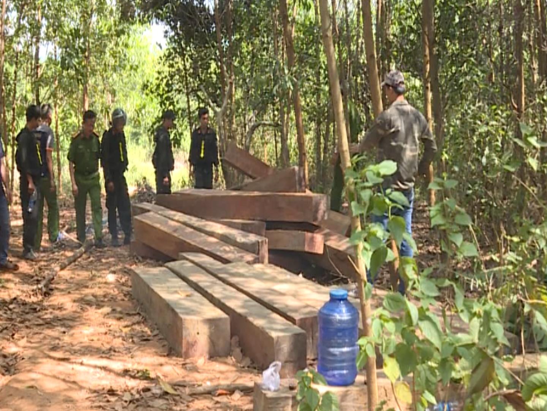 Phát hiện thêm nhiều điểm tập kết, khai thác gỗ lậu quy mô lớn tại huyện Ea Kar