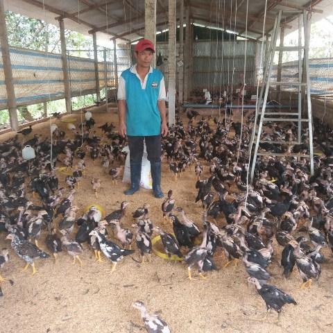 Làm giàu từ mô hình nuôi gà cho ăn trùn quế