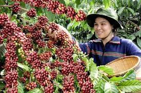 Phê duyệt Kế hoạch lựa chọn nhà thầu công trình đầu tư cơ sở hạ tầng phục vụ sản xuất cà phê bền vững cho HTX Nông nghiệp và Dịch vụ Quyết Tiến, xã Quảng Hiệp, huyện Cư M'gar