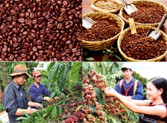 Phê duyệt Kế hoạch lựa chọn nhà thầu công trình đầu tư cơ sở hạ tầng phục vụ sản xuất cà phê bền vững cho HTX Dịch vụ Nông nghiệp Thăng Tiến, xã Hòa An, huyện Krông Pắc