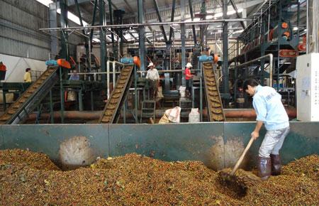 Phê duyệt Kế hoạch lựa chọn nhà thầu công trình đầu tư cơ sở hạ tầng phục vụ sản xuất cà phê bền vững cho HTX Dịch vụ Nông nghiệp Ea Ngai, xã Ea Ngai, huyện Krông Búk