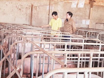 Thu nhập tiền tỷ từ mô hình trang trại nuôi gà và heo