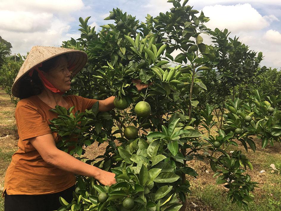 Hội LHPN xã Cư Prao:  Nhiều hoạt động hỗ trợ phụ nữ nghèo phát triển kinh tế