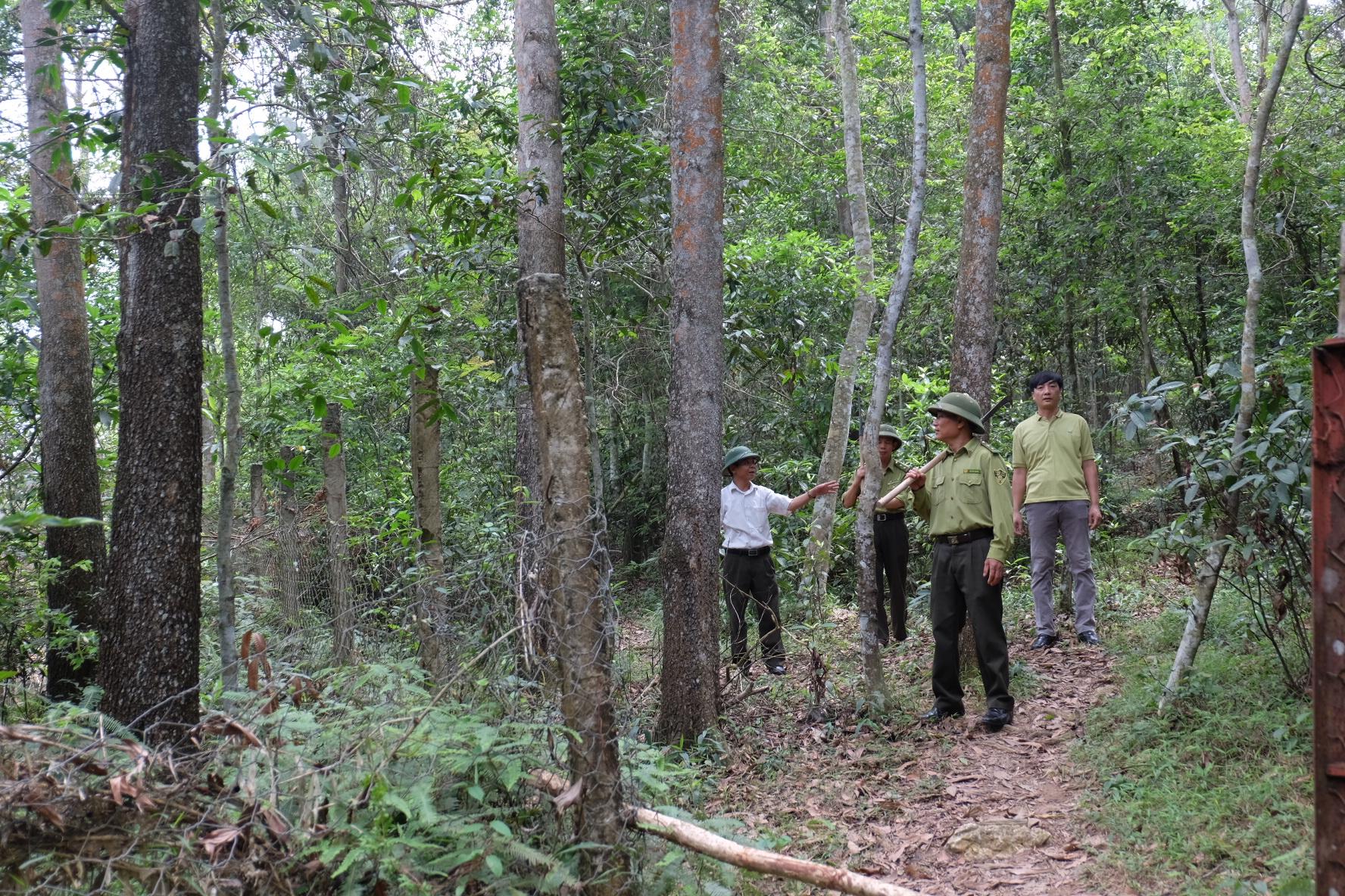 Thực hiện chính sách chi trả dịch vụ môi trường rừng.