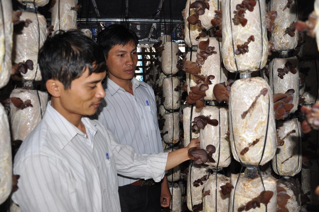 Cho phép sử dụng địa danh Krông Ana để đăng ký bảo hộ nhãn hiệu chứng nhận cho sản phẩm nấm.