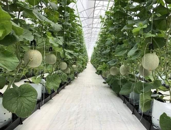 Báo cáo kết quả phát triển nông nghiệp ứng dụng công nghệ cao