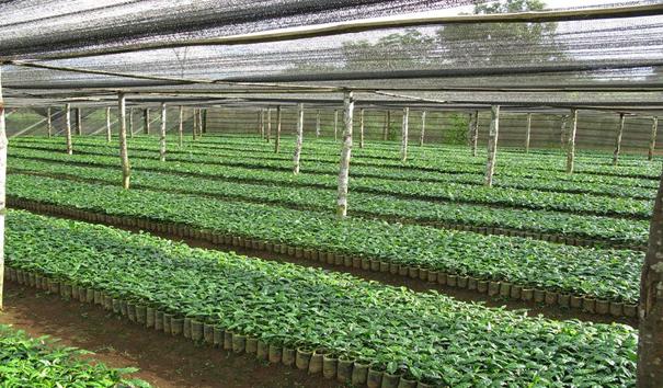 Phê duyệt danh mục đầu tư, kế hoạch lựa chọn nhà thầu tư vấn khảo sát, lập báo cáo kinh tế kỹ thuật công trình: Nâng cấp vườn ươm tư nhân đợt 3 (02 vườn) thuộc Dự án chuyển đổi nông nghiệp bền vững tại Việt Nam (VnSAT) tỉnh Đắk Lắk.