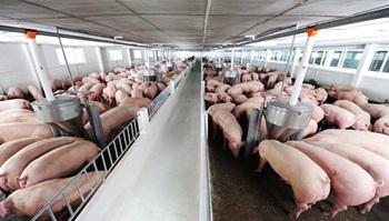 Phê duyệt bổ sung danh mục dự án Trang trại chăn nuôi heo thịt BaZan vào kế hoạch sử dụng đất năm 2019 huyện Buôn Đôn