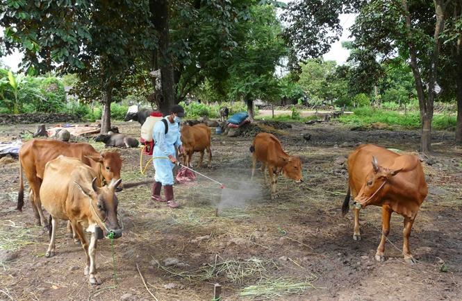 Phê duyệt Kế hoạch tiêm phòng vắc xin Lở mồm long móng (LMLM) trên địa bàn tỉnh Đắk Lắk năm 2020