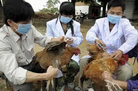 Triển khai quyết liệt, đồng bộ các giải pháp phòng chống bệnh cúm gia cầm
