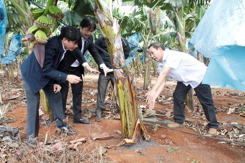 Tiếp tục đẩy mạnh cải cách hành chính trong lĩnh vực nông nghiệp nông thôn