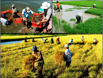 Kế hoạch thực hiện Chương trình số 37-CTr/TU, ngày 13/12/2019 của Tỉnh ủy về thực hiện Kết luận số 54-KL/TW ngày 07/8/2019 của Bộ Chính trị về tiếp tục thực hiện Nghị quyết Trung ương 7 khóa X về nông nghiệp, nông dân, nông thôn