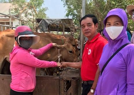 Bàn giao bò cho hộ nghèo xã biên giới từ nguồn nhắn tin 1409