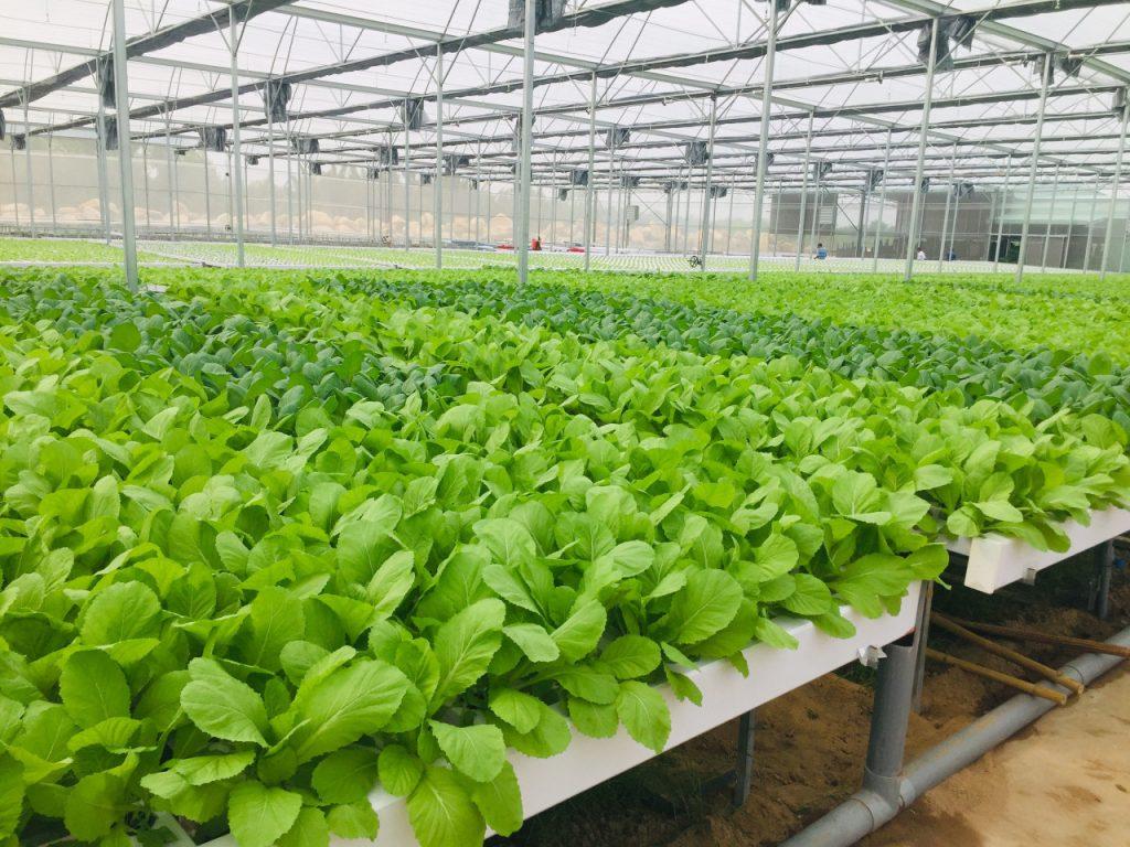 Công ty TNHH thương mại và sản xuất Nông sản Sapo Đắk Lắk thuê 19.372,7 m2 đất tại Cụm Công nghiệp Krông Búk 1, xã Pơng Drang, huyện Krông Búk để thực hiện dự án đầu tư Tổ hợp sản xuất rau củ quả xuất khẩu Sapo Đắk Lắk