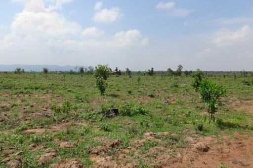 Quyết định về việc giao đất tại thị trấn Liên Sơn, huyện Lắk
