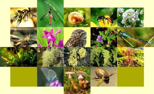 Hưởng ứng Ngày quốc tế Đa dạng sinh học năm 2020