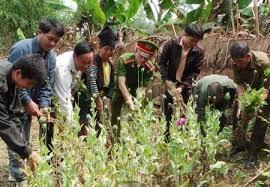Triển khai Công văn số 2941/BNN-KTHT, ngày 13/4/2016 của Bộ Nông nghiệp và Phát triển nông thôn