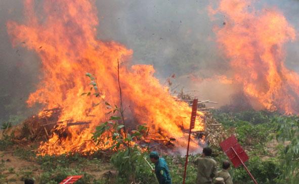 Tổng cục Lâm nghiệp  đề nghị tăng cán bộ kiểm lâm xuống các trọng điểm về cháy rừng