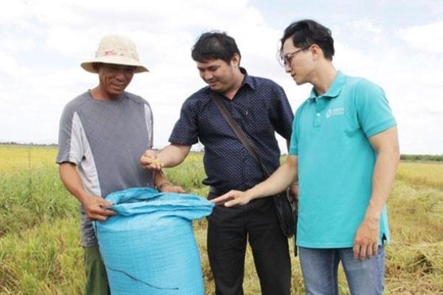 Đắk Lắk nhân rộng thành công gạo ST24