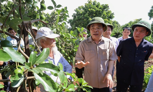 Tây Nguyên nhiều tiềm năng để phát triển cây ăn quả trong tương lai