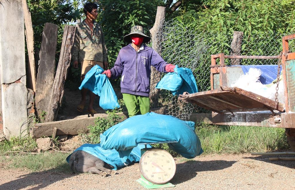 Xử lý ổ dịch tả lợn Châu phi trên địa bàn huyện Ea Súp