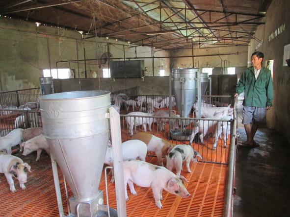Đắk Lắk hướng đến xây dựng vùng chăn nuôi an toàn dịch bệnh