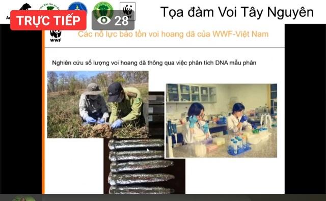 Tổ chức Động vật Châu Á tổ chức Tọa đàm trực tuyến về voi Tây Nguyên