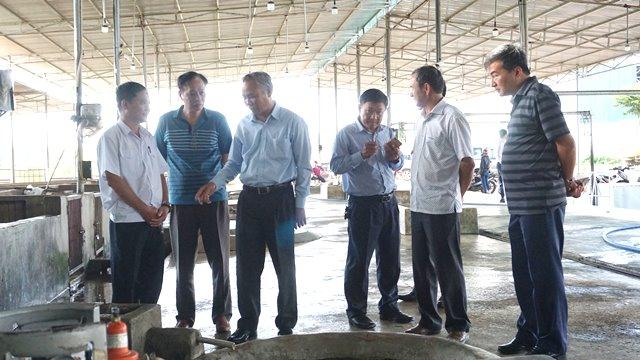 Triển vọng từ các dự án chăn nuôi mới ở các tỉnh Tây Nguyên