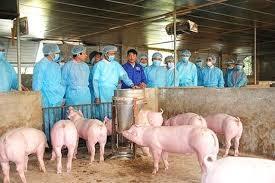 Quyết định ban hành Kế hoạch thông tin, tuyên truyền phòng, chống bệnh Dịch tả lợn Châu Phi giai đoạn 2021-2025 trên địa bàn tỉnh