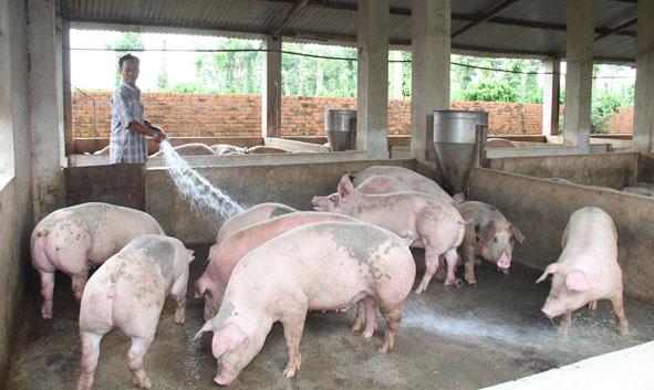 Kiểm soát tốt dịch bệnh trên đàn gia súc, gia cầm trong quý 4/2020