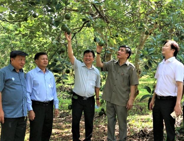 Hội chợ thương mại nông nghiệp trái cây Krông Pắc năm 2020