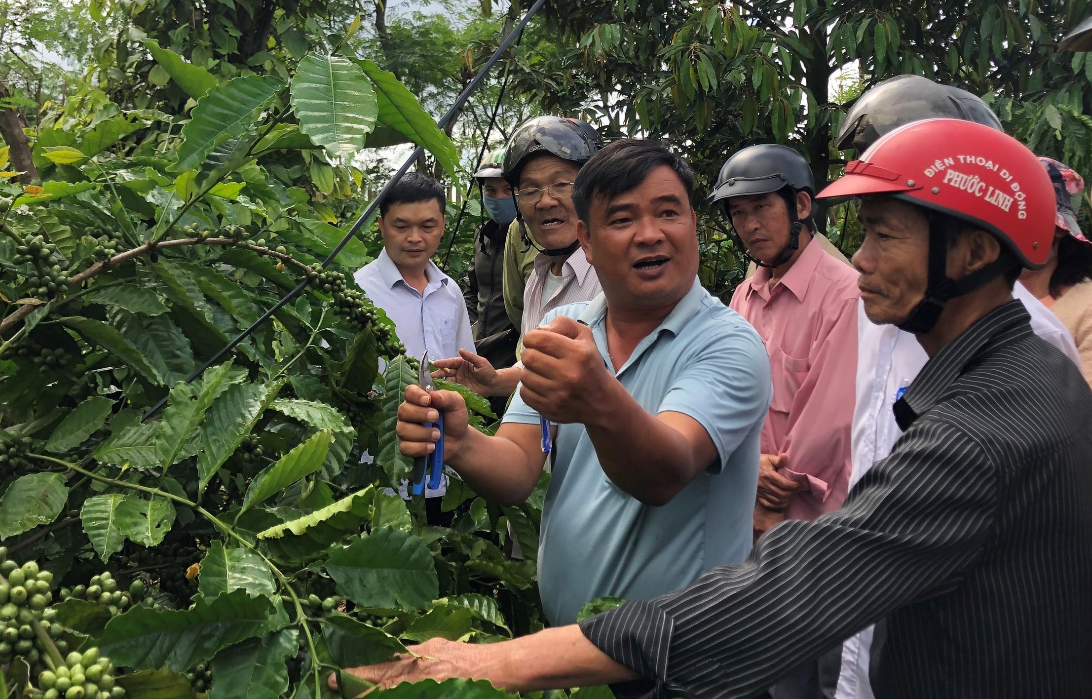 Tập huấn trồng và chăm sóc cây ăn quả trong vườn cà phê