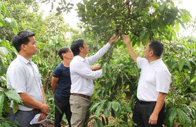 Đắk Lắk kiến nghị Trung ương có cơ chế, chính sách đặc thù cho phát triển cây Mắc ca