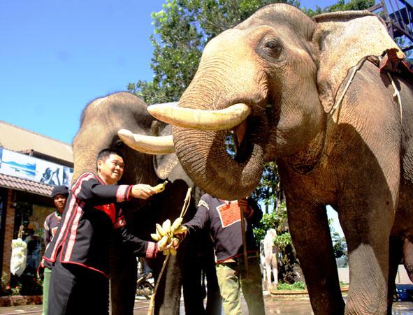 Không đưa khách đến tham quan các điểm khai thác, mua, bán, nuôi nhốt động vật hoang dã trái phép