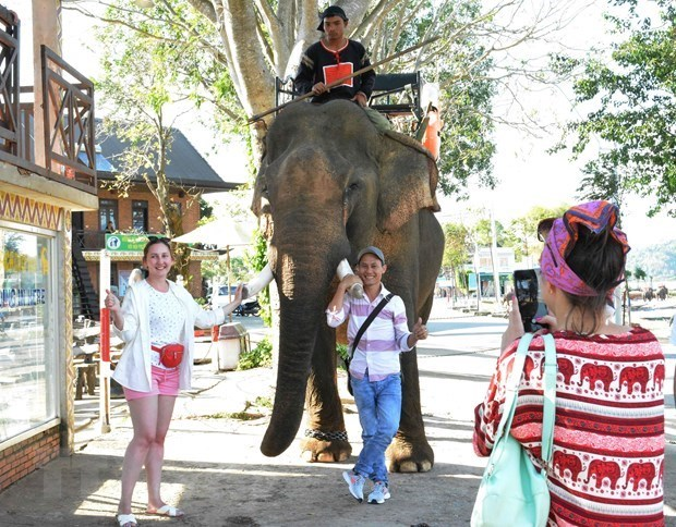 Đắk Lắk xây dựng Đề án chuyển đổi mô hình du lịch thân thiện với voi