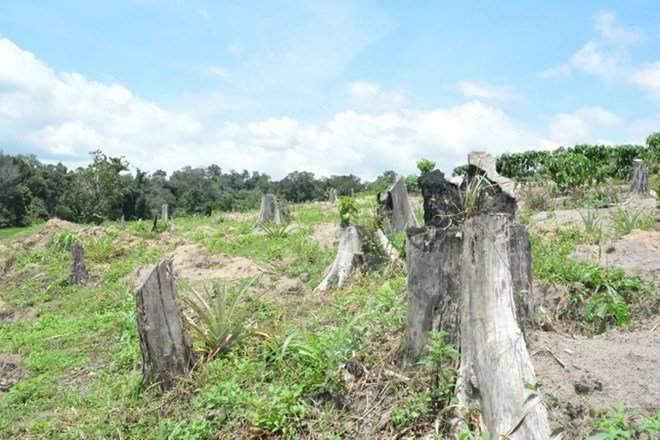 Quyết định thu hồi đất của Công ty cổ phần Công nghiệp rừng Tây Nguyên
