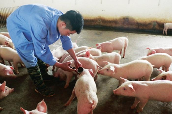 Quyết định phê duyệt Kế hoạch phòng, chống bệnh Lở mồm long móng (LMLM), giai đoạn 2021-2025 trên địa bàn tỉnh Đắk Lắk