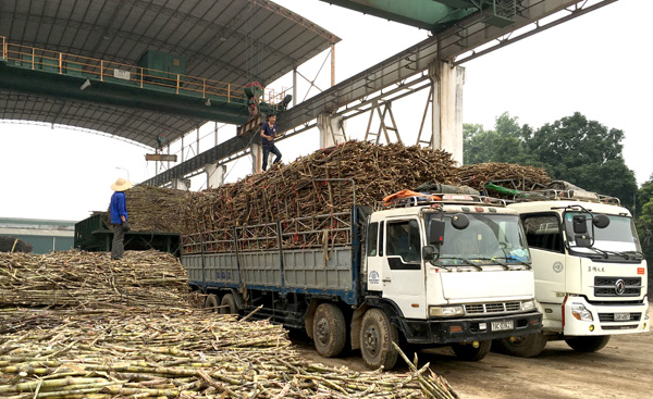 Quyết định phê duyệt quy hoạch vùng nguyên liệu mía của Công ty TNHH đường Khánh Hòa tại huyện M'Đrắk