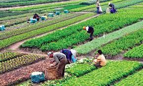 Nghị định số 45/2021/NĐ-CP: Quỹ hỗ trợ phát triển hợp tác xã hoạt động