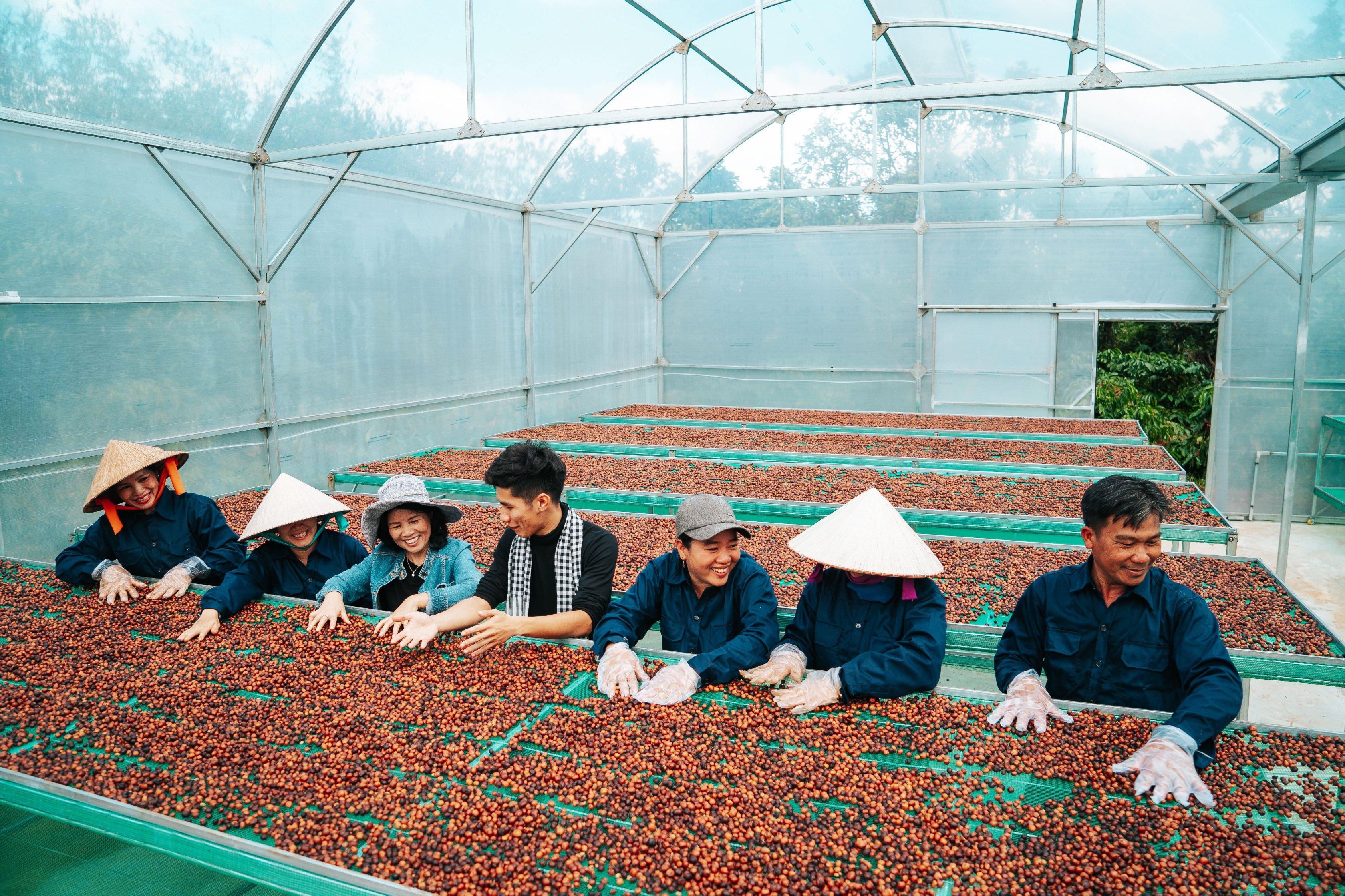 8 tỉnh được quy hoạch phát triển cà phê đặc sản Việt Nam
