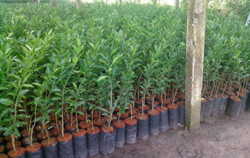 Tăng cường công tác quản lý hoạt động sản xuất, kinh doanh giống cây trồng trên địa bàn tỉnh Đắk Lắk
