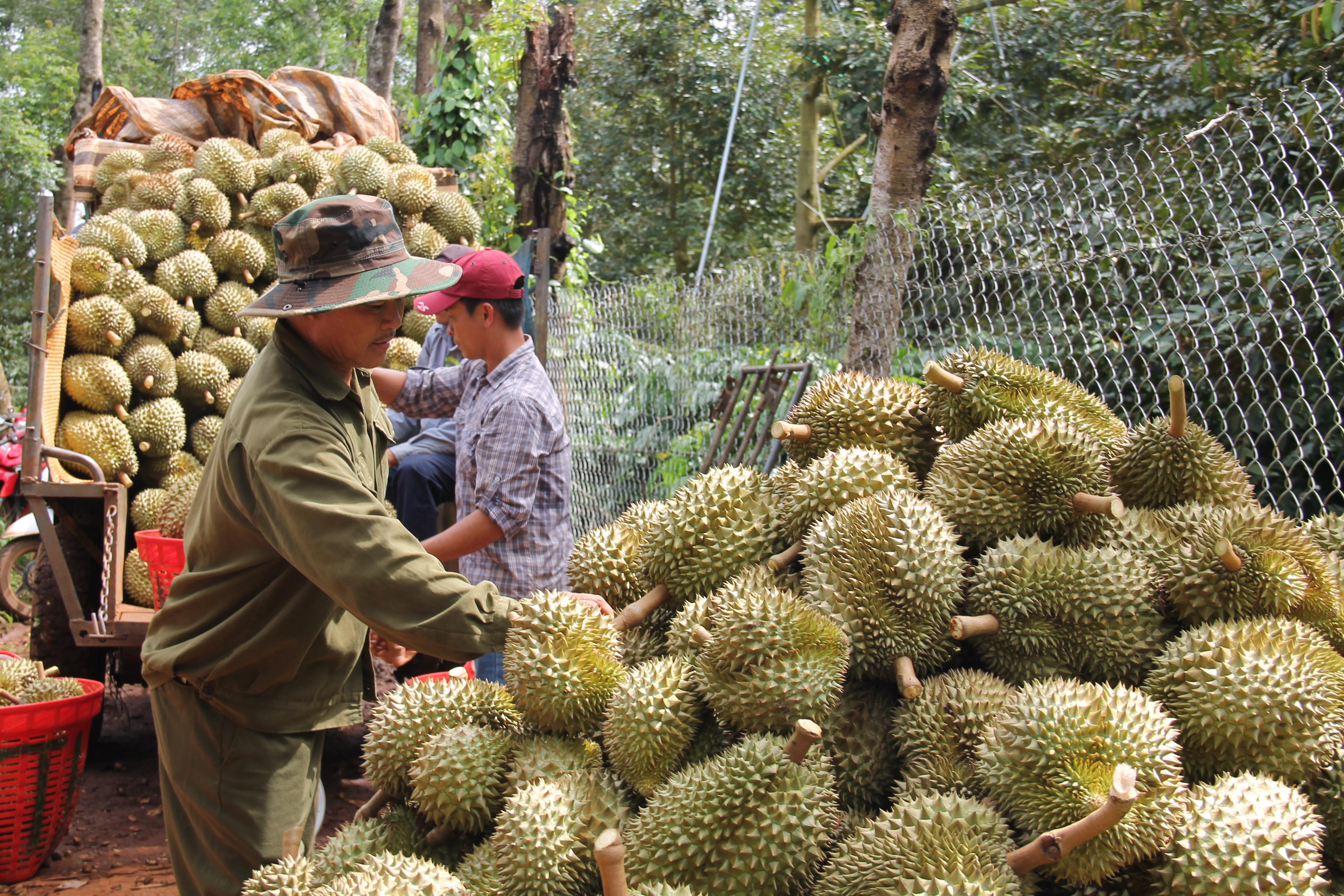 Đắk Lắk kiến nghị hỗ trợ tiêu thụ nông sản trong điều kiện dịch COVID-19