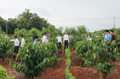 Triển khai Quyết định số 2085/QĐ-BNN-TT ngày 31/5/2016 của Bộ Nông nghiệp và Phát triển nông thôn